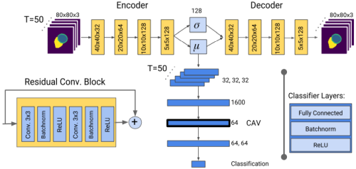 Network architecture for interpretable disease classification